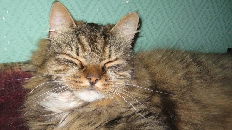Katter er også mer selvstendige enn andre dyr, klarer seg ofte selv! thumbnail